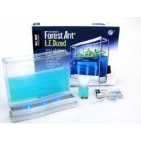 Oceans & Jardins - Fourmilière Forest Super avec base lumineuse