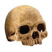 Exo terra - Primat Skull décoration 15x16x16 cm