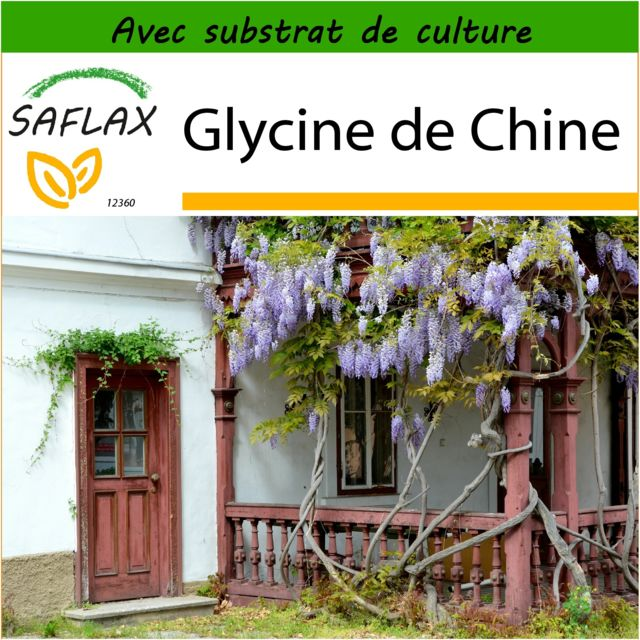 saflax glycine de chine 4 graines avec substrat de culture aseptique wisteria sinensis. Black Bedroom Furniture Sets. Home Design Ideas