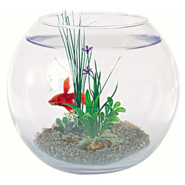 Aquael - Aquarium en Boule Équipé 25cm