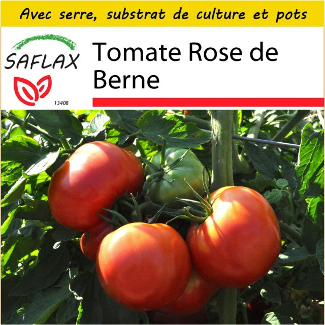 Saflax Kit de culture - Tomate Rose de Berne - 10 graines - Avec mini-serre, substrat de culture et 2 pots - Lycopersicon escul