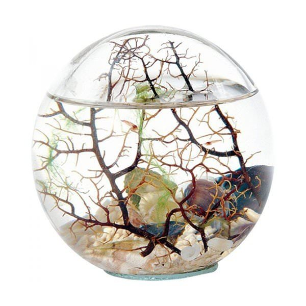 Oceans & Jardins - Bioglobe gorgone 25 cm