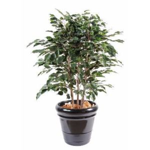 Artificielflower arbuste artificiel ficus exotica for Arbuste artificiel exterieur pas cher