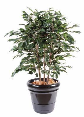 artificielflower arbuste artificiel ficus exotica buisson plante dintrieur h80 - Arbuste Artificiel Exterieur Pas Cher