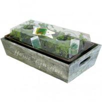 - Mini Jardin herbes aromatiques