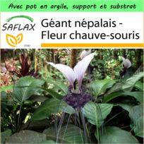 Saflax - Jardin dans la boîte - Géant népalais - Fleur chauve-souris - 10 graines - Avec pot en argile, support, substrat de culture et engrais - Tacca nevia white