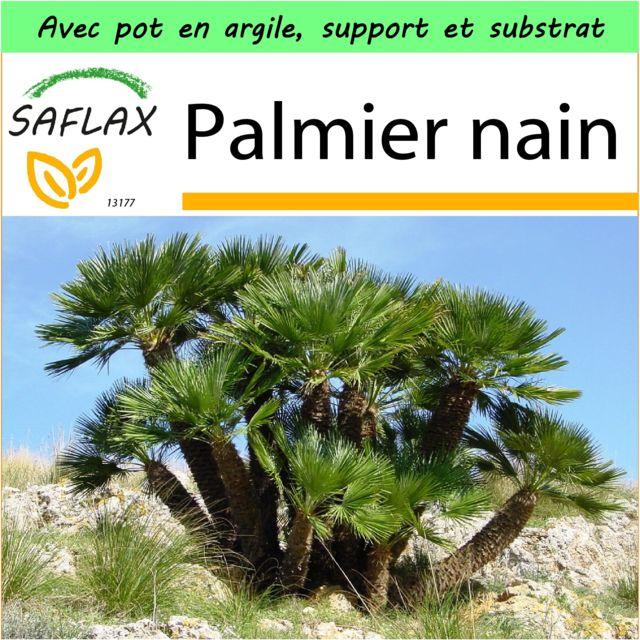 entretien palmier chanvre simple palmiers chanvre fleurs achat plantes de with entretien. Black Bedroom Furniture Sets. Home Design Ideas