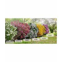 Willemse France - Collection 'la Haie des quatre saisons'- 18 arbustes Extra 3/5 branches 18 arbustes de 3 à 5 branches de 40-60cm