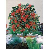 Bac arbuste achat bac arbuste pas cher rue du commerce - Saule crevette sur tige en pot ...