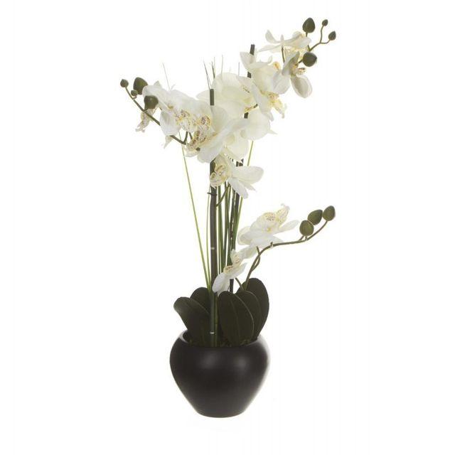 Composition Florale Orchidée & Vase Céramique 53cm Noir
