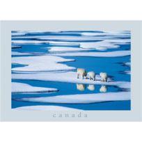 Nouvelles Images - Famille d'ours polaires, Passage du Nord-Ouest, Canada / Polar bear family, Northwest Passage, Canada / Eisbärenfamilie, Nordwest Passage, Kanada , Dr Hinrich BÄSEMANN