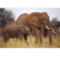 out of the blue cadre en toile elphants - Cadre Elephant