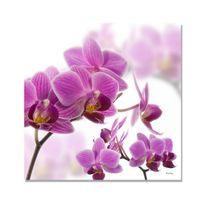 Boniday - Tableau Orchidée Violette 30 x 30 cm