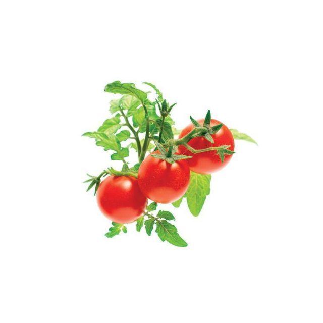 Click & Grow Recharge triple de Mini-Tomates pour Smart Garden - Click and Grow