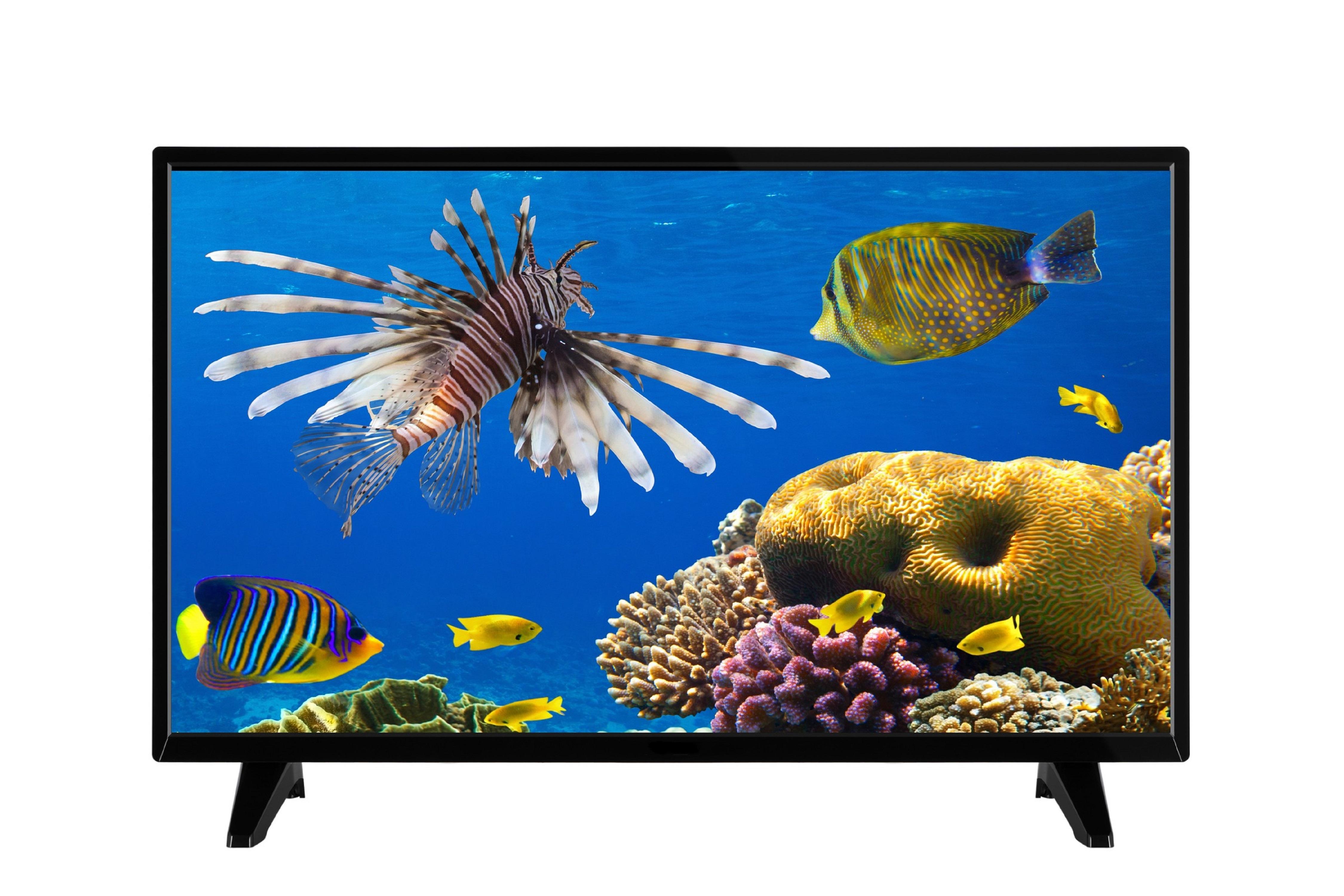 "CLAYTON TV LED HD - 32"" ( 80 cm ) - CL32DLED20B - Noir"