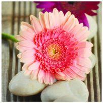 Tableau Toile Cadre Zen Fleur Rose Zoom Galets Blancs Nature 28x28cm