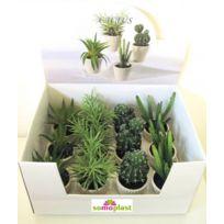 Somoplast - Coffret de 12 plantes et cactus assorties - Idéal pour professionnel - Création haut de gamme