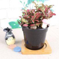 Soldes Petit Pot Fleur Decoratif Achat Petit Pot Fleur Decoratif