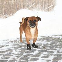 Trixie - Bottes de protection Walker Active 2 pieces Xs - Noir - Pour chien