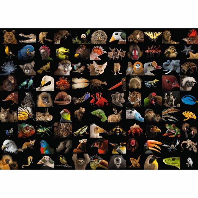 Ravensburger Puzzle 1000 pièces - 99 animaux époustouflants / National Geographic