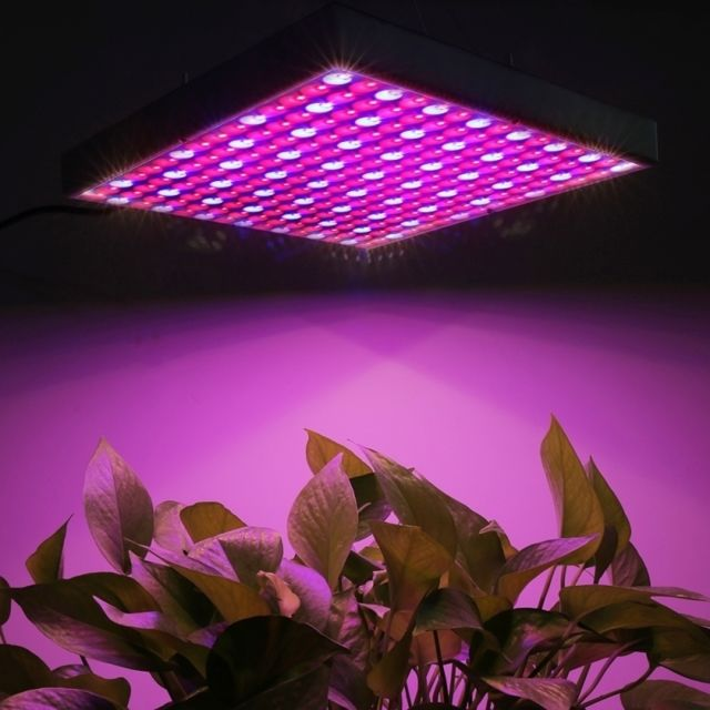 Wewoo Lampe rouge et bleu 14W 225 Leds Smd 3528 + Lumière Led Plant Croissance Aquarium Lumière, Ac 85-265V