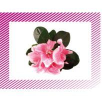 """Editions Lito - images """"les fleurs"""" - boite de 100"""