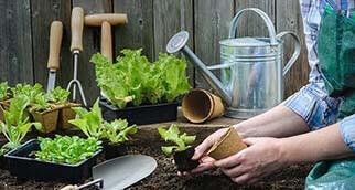 Jardiner et entretenir