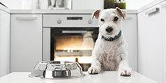 Guide nourrir chien