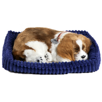 Perfect Petzzz - Chien Cavalier King Charles