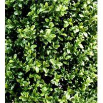 Artificielflower - Plante artificielle Buis Boule - intérieur extérieur - H.22 cm vert - diamtre : 22 cm