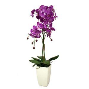 Ligne deco orchid e blanche en pot noir pas cher achat for Orchidee exterieur