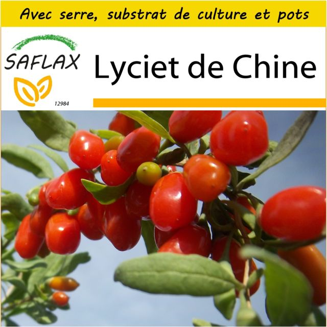 Saflax Kit de culture - Lyciet de Chine - 200 graines - Avec mini-serre, substrat de culture et 2 pots - Lycium chinensis