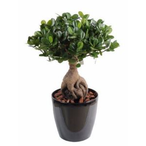 Artificielflower bonsa artificiel arbre miniature ficus for Petite plante interieur
