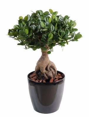 Artificielflower Bonsaï artificiel arbre miniature Ficus Panda Ginseng - plante d'intérieur - H.60cm