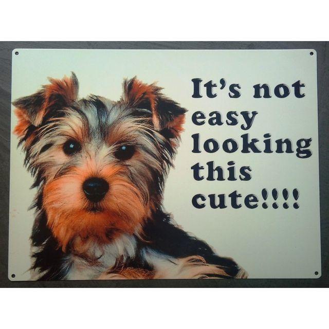Universel Plaque chien yorkshire de face affiche tole deco toutou