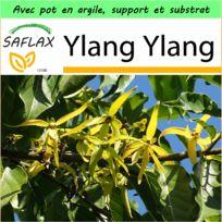 Saflax - Jardin dans la boîte - Ylang Ylang - 10 graines - Avec pot en argile, support, substrat de culture et engrais - Cananga odorata