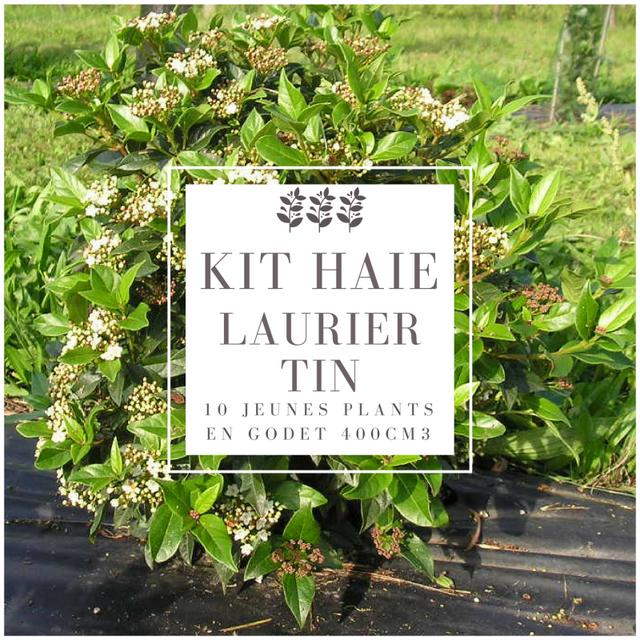 pepinieres naudet kit haie laurier tin viburnum tinus haie en kit 10 jeunes plants pas. Black Bedroom Furniture Sets. Home Design Ideas