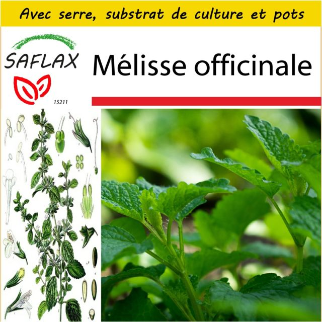 Saflax Kit de culture - Mélisse officinale - 150 graines - Avec mini-serre, substrat de culture et 2 pots - Melissa officinalis