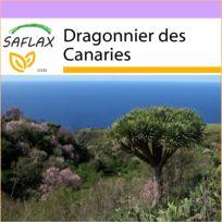 Saflax - Dragonnier des Canaries - 5 graines - Dracaena Draco
