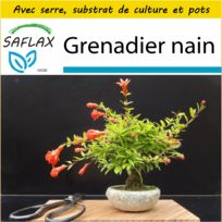 Grenadier A Fruits Catalogue 2019 Rueducommerce