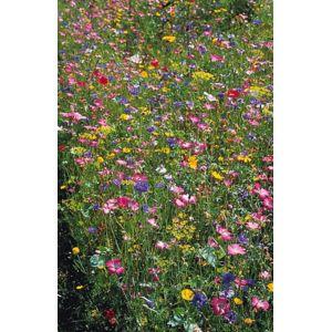 Willemse france m lange fleurs des champs le sachet for Willemse fleurs