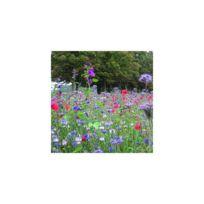 Sans Marque - Mélange Prairie fleurie Mellifère Sachet de 250 gr