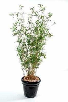 artificielflower bambou artificiel oriental 11 cannes fines plante d 39 int rieur. Black Bedroom Furniture Sets. Home Design Ideas