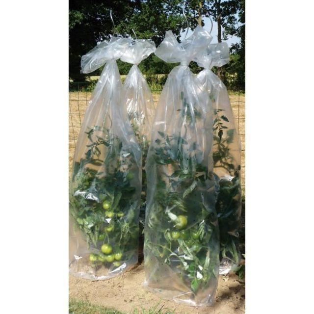 PAILLAGE - VOILE - PROTECTION CULTURE Housse de croissance tomates en polyéthylene - Epaisseur 50 µm - 0,60 x 10 m