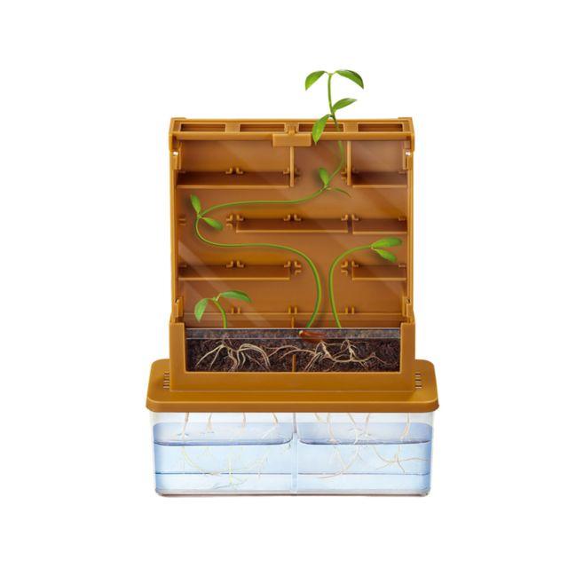4M - Kidz Labs - Kit de fabrication Green Science : Labyrinthe de croissance
