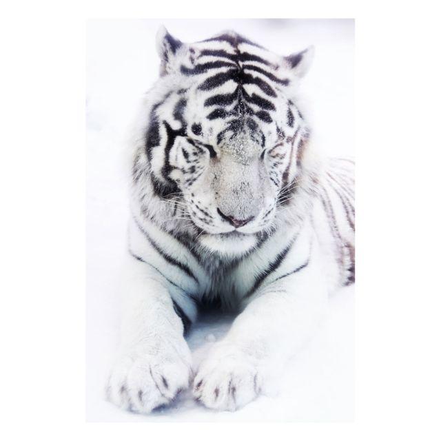 Artis - Toile imprimée Portrait Tiger - 65 x 97 cm 97cm x 65cm