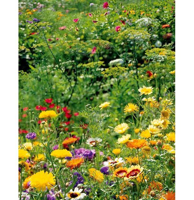 Willemse France Mélange de fleurs spécial \
