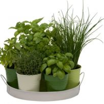 - Plateau 7 herbes aromatiques