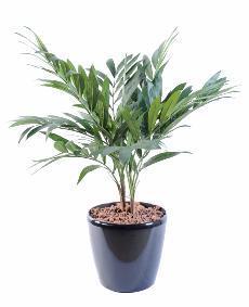 Palmier artificiel Parlour en pot - plante synthétique d intérieur - H. 65cm