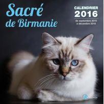 Artemis - sacré de birmanie 2016